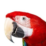Business Reviews Aggregator: Veterinary Hospital Bird and Exotic Animal