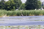 Business Reviews Aggregator: Bowmanville Harbour Conservation Area