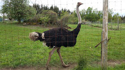 Business Reviews Aggregator: White Rock Ostrich Farm